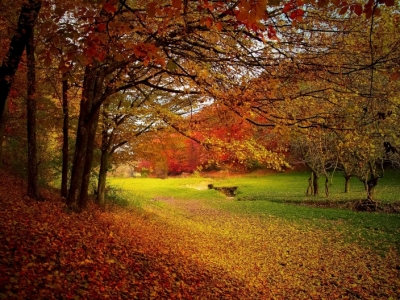 5 Autumn Activity Ideas