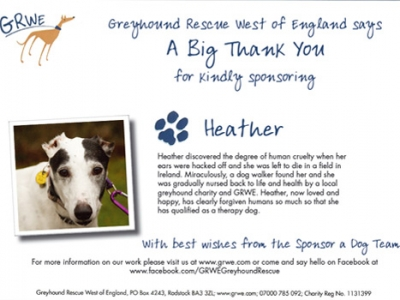 Heather the Greyhound