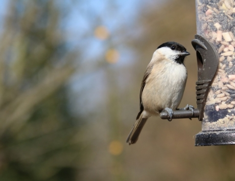 How can we look after our wildlife as the weather gets colder?